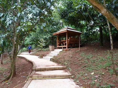 Excursii Thailanda: spice garden Phang Nga Thailanda