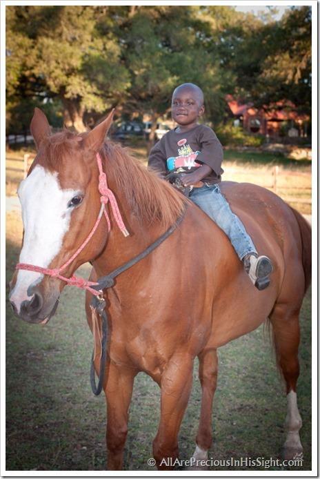 Kiefer horse