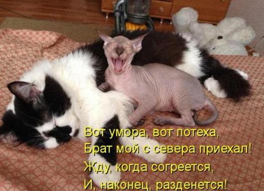 c962a25ba12aba019ce54f1e93e_prev