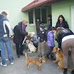 Galerija - Životinjske priče - Druga šetnja pasa 23.2.2013.