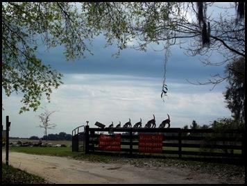 Gainesville to Hawthorn Bike Trail 187