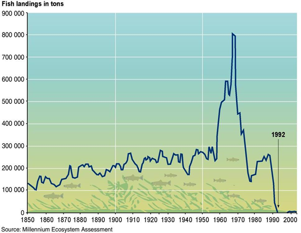 Collapse of the North Atlantic cod fishery. The graph shows fish landings, in tons, for 1850-2005. Millenium Ecosystem Assessment via wn.com