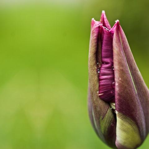 Closed-Iris