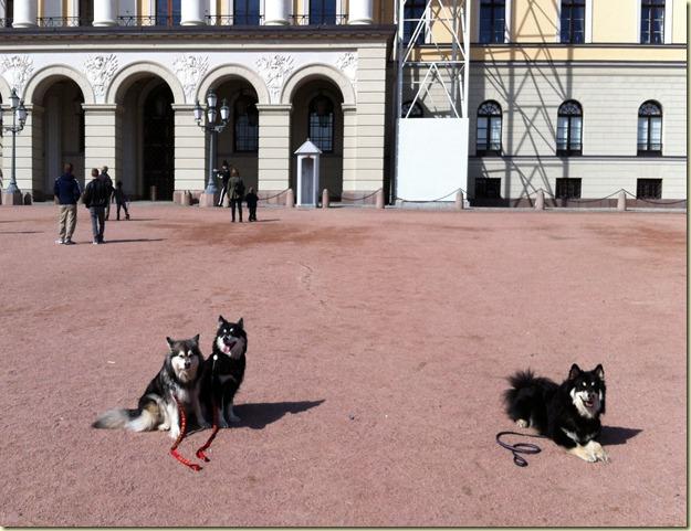 120414 Hundetur Slottsplassen