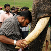 Kumki Shooting Spot Photos