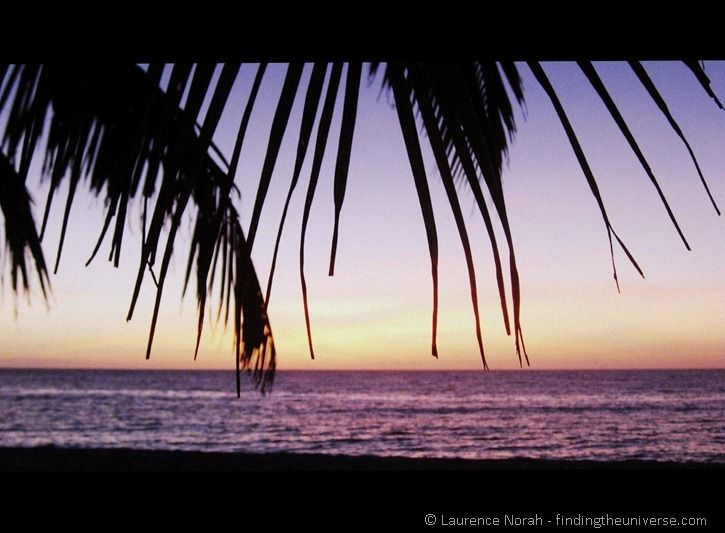Palm tree fronds sunset beach sea