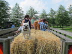 Are you folks ready to come with us for a hay ride?  The more passengers the merrier!  Hop on board!