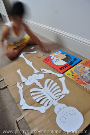 Assembling Our DIY Human Skeleton Puzzle