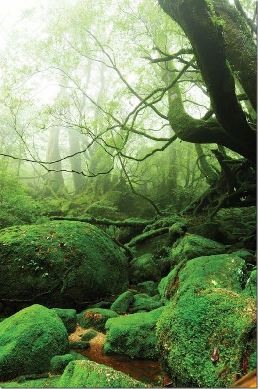 floresta no japão (10)