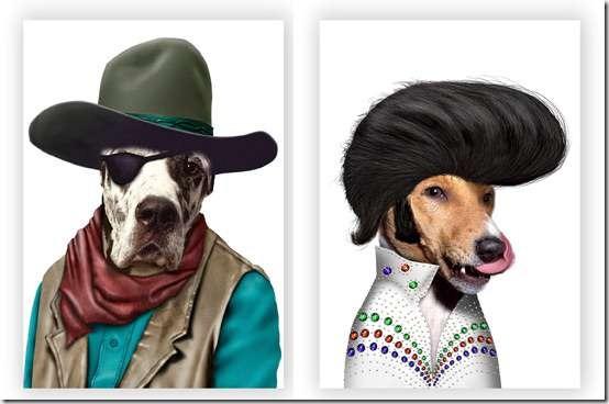 perros dsifrazados (3)