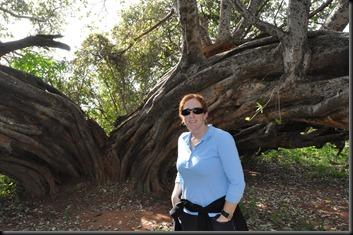 David Livingstone tree