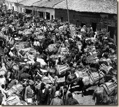 Il mercato dei cavalli a Korça è il più grande di tutta l'Albania. (foto: Melville Chater)