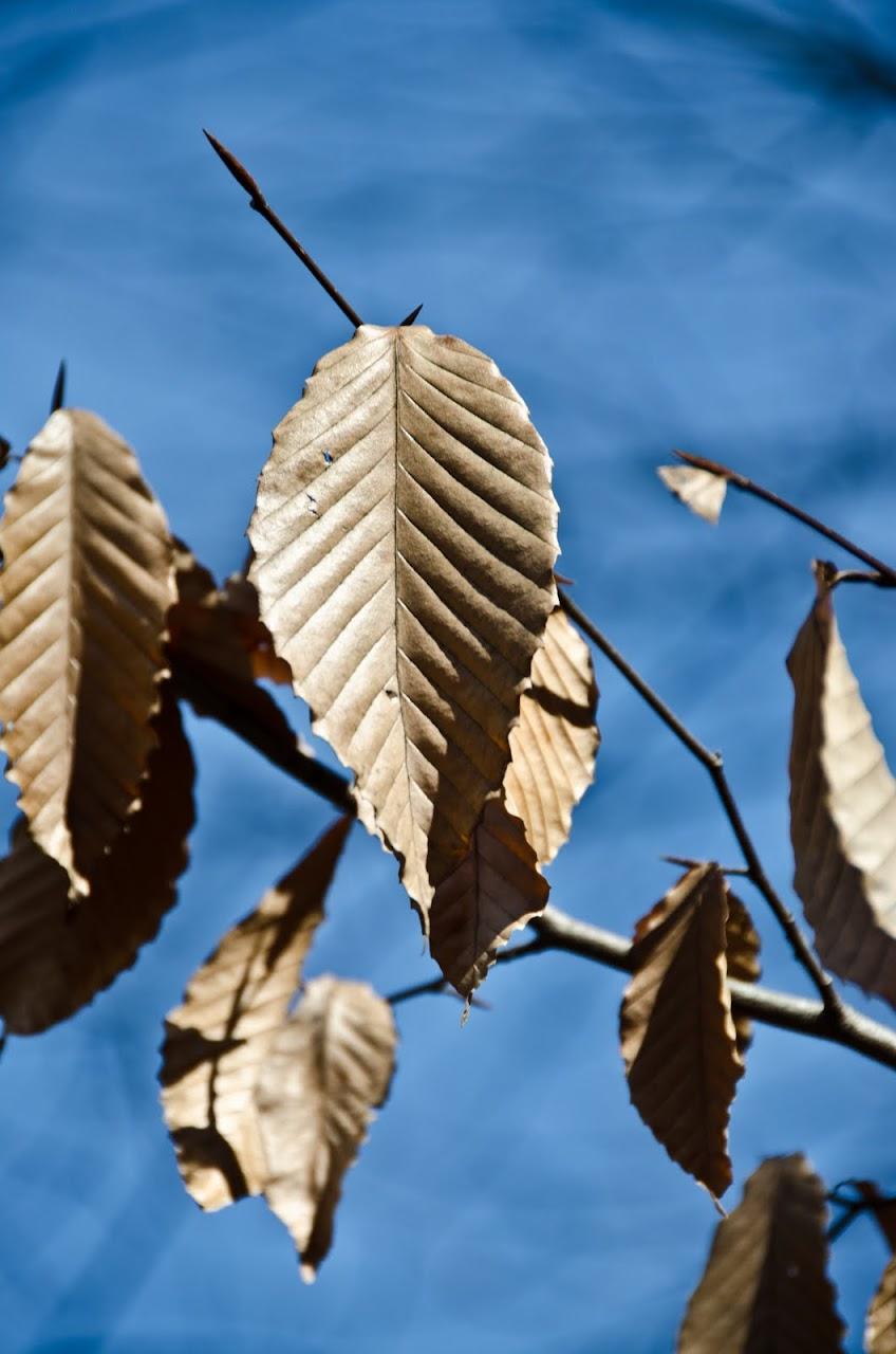Leaf at Herbert Taylor Park