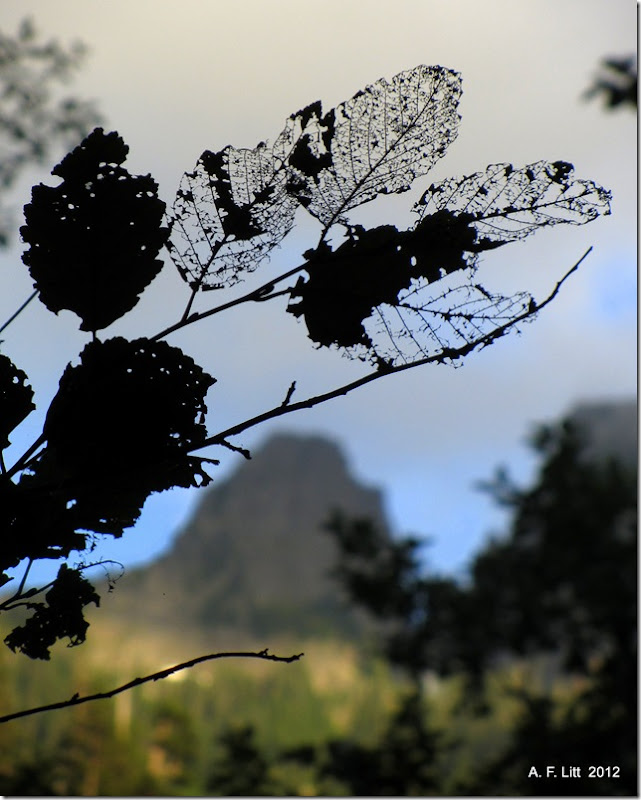 Skeletal Leaves.  Taylor River Valley.  Washington.  August 14, 2012.  Photo of the Day by A. F. Litt: September 5, 2012.