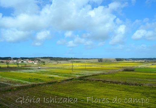 Glória Ishizaka - primavera - campo