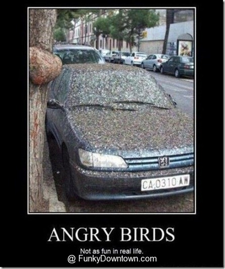 funny-angry-birds-1