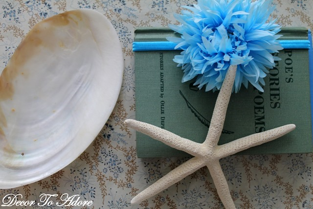 seashells 013-001