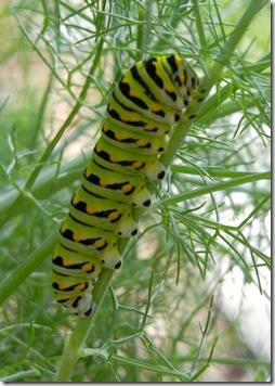 caterpillar06