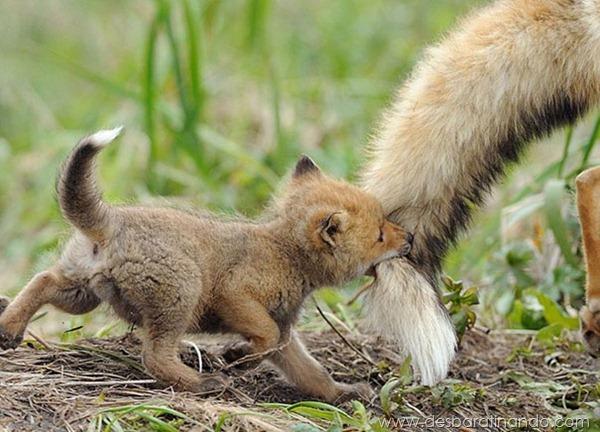 filhotes-de-animais-fotos-cute-cuti-desbaratinando (14)