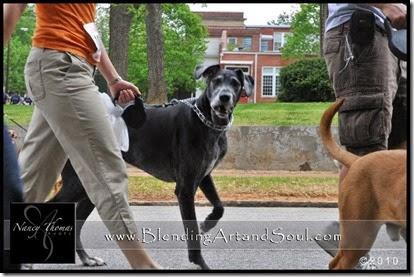 Dog Walk_3Morgan