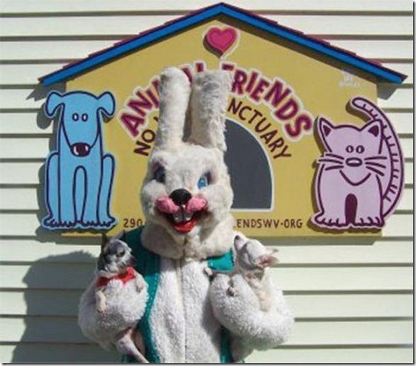 easter-awkward-bunny-13