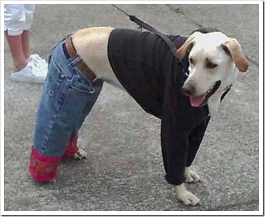 Dog in street clothes