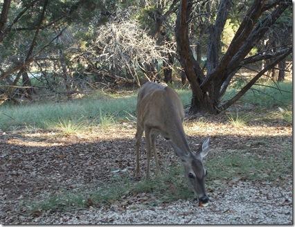 Deer visit 002
