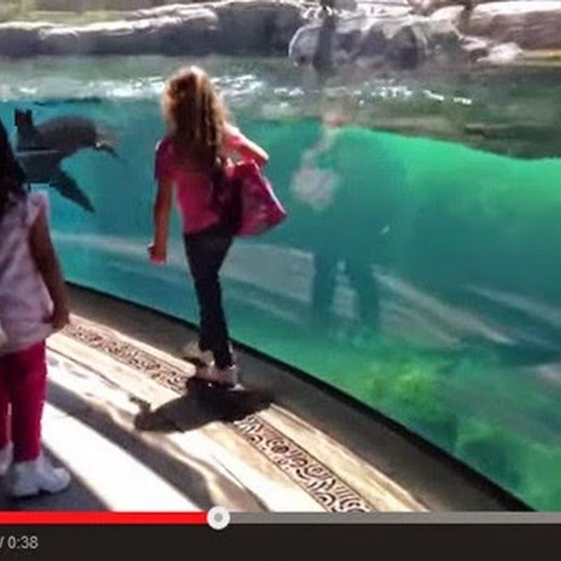 Μικρό κορίτσι παίζει με ένα θαλάσσιο λιοντάρι