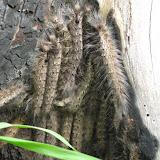 Maun - Maun Wildlife reserve (23).JPG
