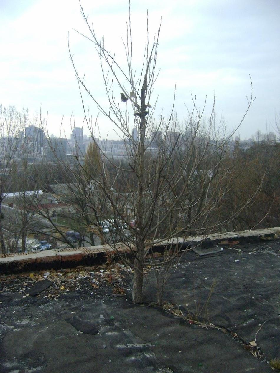 32_СССР_Вика-25-11-2010.jpg