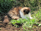Catnip, or Nepeta, seems to affect many cats in strange ways. Some stretch out really long.  Others shake their heads, or stare, or even salivate.  Some cats even run and leap through the air!