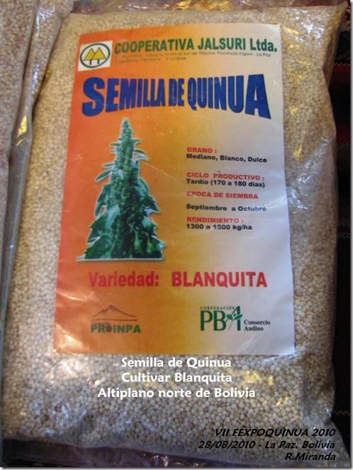 Semilla de Quinua del cultivar Blanquita - Rubén Miranda-Laquinua.blogspot.com