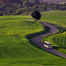 by Abdullah Toker - Nature Up Close Gardens & Produce ( #nature #farm #green )