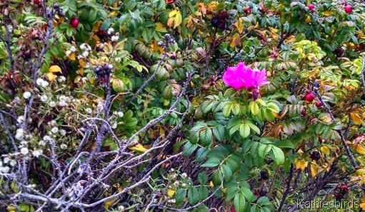 10-21-14 last roses