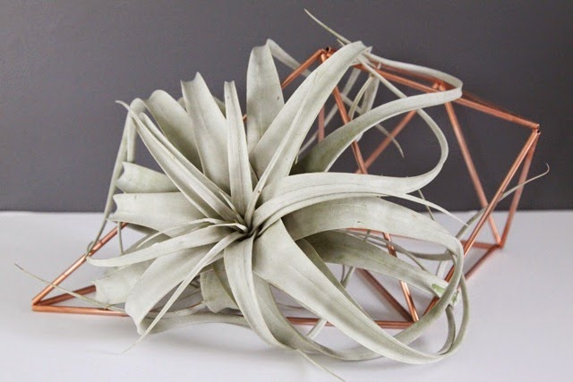 Copper Himmeli Air Plant Holder