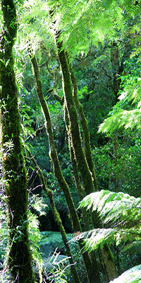 Rainforest, Lamington National Park