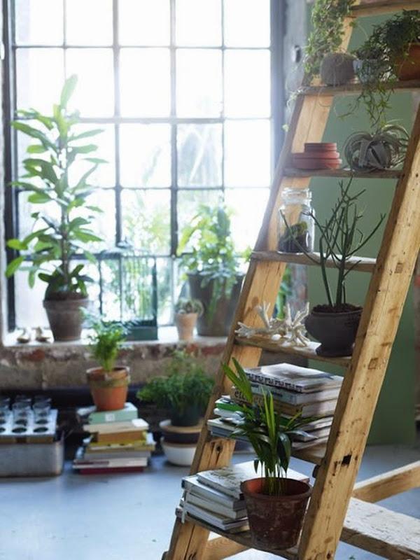 Plants_indoor_jungle_mood