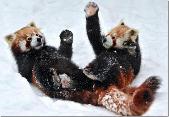 funny-animals-cute-42