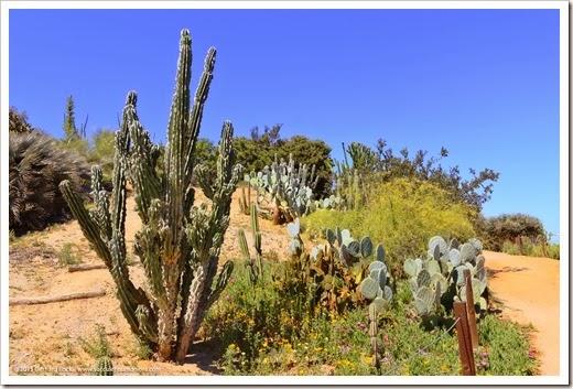 150324_SanDiego_BalboaPark_DesertGarden_033