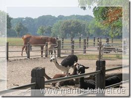 Pferde und Lamas