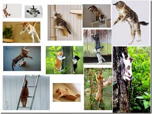 ekor-kucing-saat-naik-turun-loncat