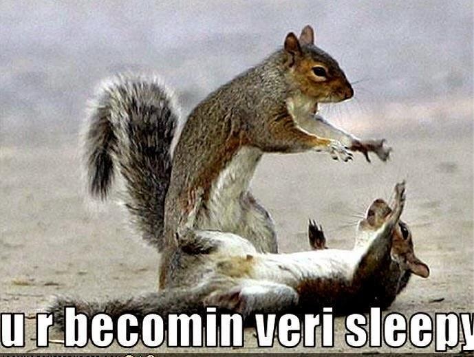 gambar hewan lucu di choonytunes.blogspot.com