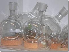 Erlenmeyer Bulb