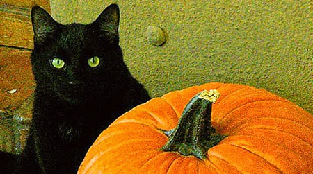 halloween black cat 001