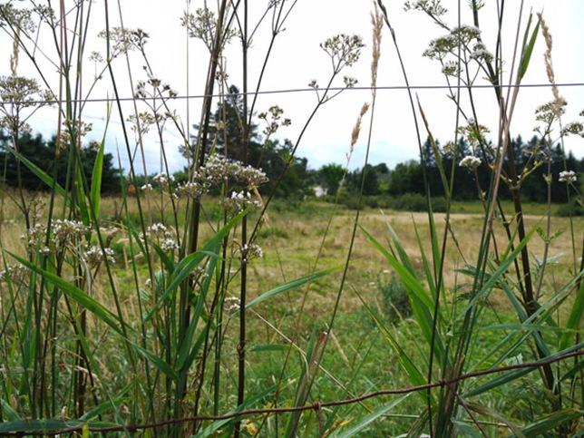 meadow_1