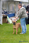 20100513-Bullmastiff-Clubmatch_31054.jpg
