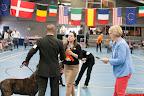 20130510-Bullmastiff-Worldcup-0979.jpg