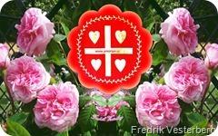 DSC07386-1-Rosa-rosor-blommor.-Med-a[2]