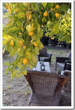 120103_lemon_09