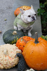 We love pumpkins and gourds!
